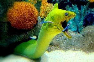 duiken Aruba