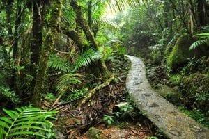 Caribische eilanden Puerto Rico
