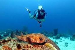 Curaçao vakantie duiken