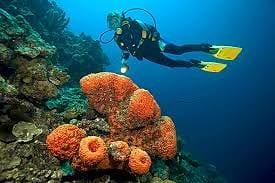Bonaire vakantie duiken