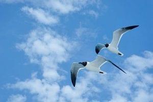 Aruba birds