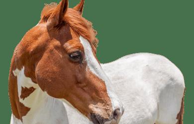 Paardrijden Aruba