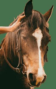 Aruba paardrijden