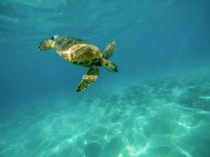 schildpadden zwemmen curacao